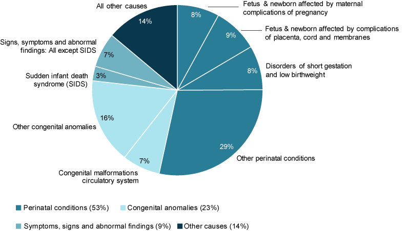 This pie chart shows the leading causes of infant death in 2017. The leading causes of infant death were perinatal conditions (53%25), followed by congenital anomalies (23%25) and symptoms, sign and abnormal findings (including sudden infant death syndrome) (9.3%25).