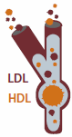 Figure showing different amounts of LDL and HDL cholesterol in the bloodstream.
